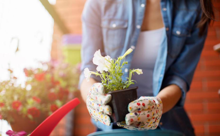 diese pflanzen helfen gegen m cken. Black Bedroom Furniture Sets. Home Design Ideas